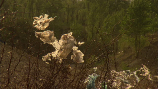 ms plastic bag caught in bushes and blowing in wind, longbaoshan village, hebei, china - bush stock videos & royalty-free footage