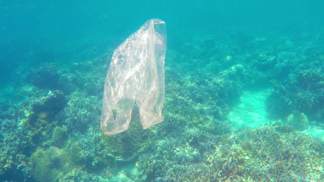 vídeos de stock e filmes b-roll de plastic bag floating in north bali coral reef - lixo