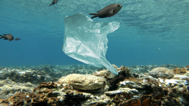 plastic bag floating in sea - aquatic organism stock videos & royalty-free footage