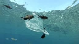 Plastic bag floating in sea