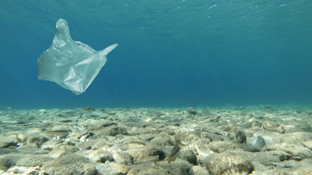 plastic bag floating in sea - plastic bag stock videos & royalty-free footage