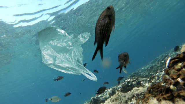 vídeos y material grabado en eventos de stock de bolsa de plástico flotando cerca de peces de mar - bolsa de plástico