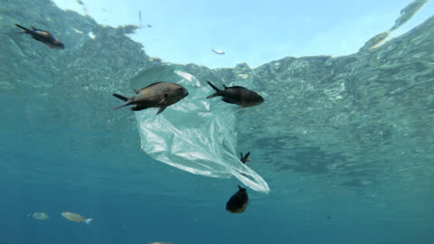plastic bag floating in sea - environmental issues stock videos & royalty-free footage