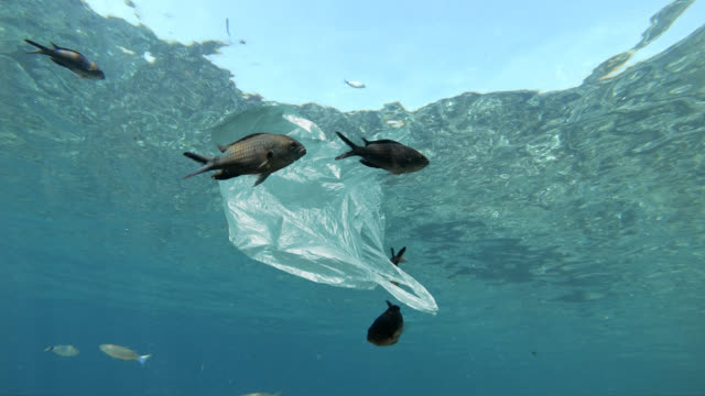 vídeos de stock e filmes b-roll de plastic bag floating in sea - poluição