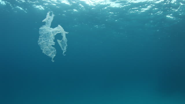 Plastic bag floats in tropical water, POV