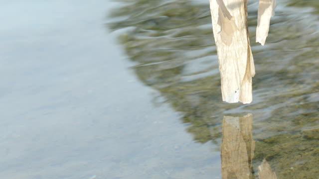 vídeos de stock, filmes e b-roll de saco plástico preso em um galho na margem do rio close-up - saco de lixo