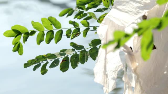 plastic bag stuck on a branch on riverbank close-up - sacco per immondizia video stock e b–roll