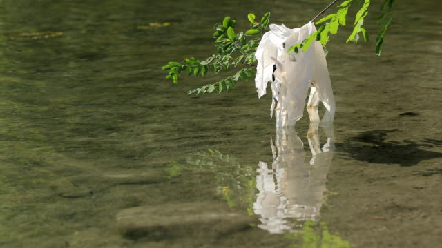 plastic bag stuck on a branch on riverbank - riverbank stock videos & royalty-free footage