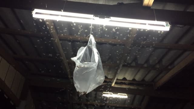 Plastic bag trap insect flying around lamp