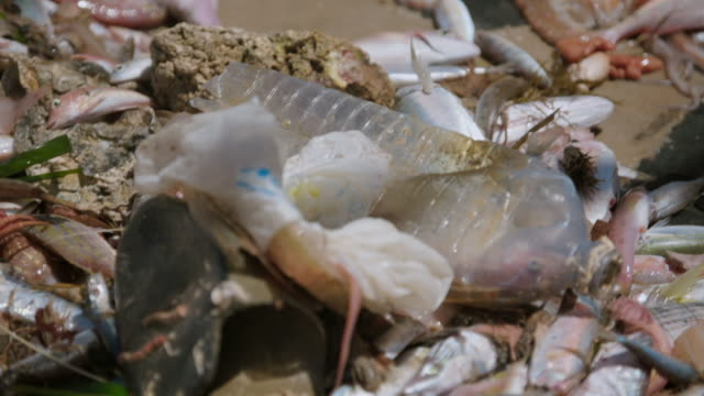 plastic being pulled out of the sea by spanish fishermen - pulizia dell'ambiente video stock e b–roll