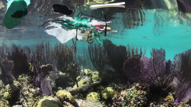 Plastic floats over coral reef in Bermuda