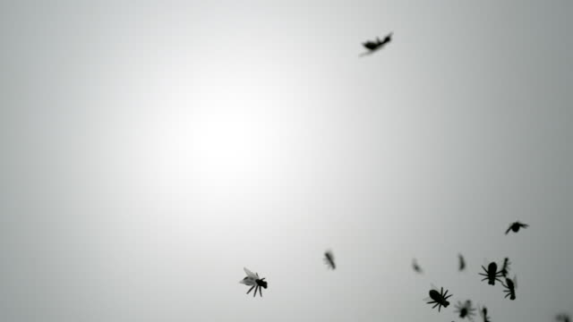 Plastic fly flying in the air, slow motion-close up