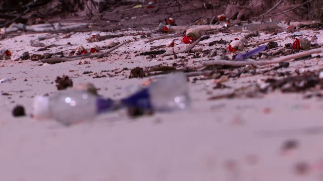 plastic waste on a tropical beach - hermit crab stock videos & royalty-free footage