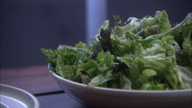 cu zi plate of lettuce for salad, lighting suddenly changing to ultraviolet, walkerton, ontario, canada - eschericia coli stock-videos und b-roll-filmmaterial