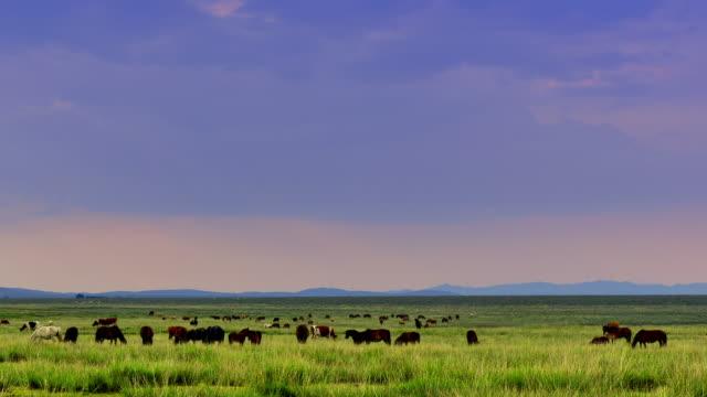 4K: Plateau Pasture at Sunset, Time Lapse - Panning