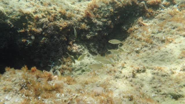 vídeos y material grabado en eventos de stock de paisaje submarino platja d'aro durante el verano - lecho del mar