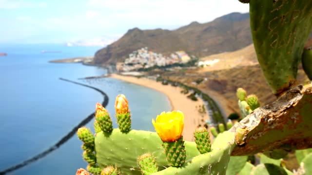 Playa de las Teresitas with looming cactus in the foreground