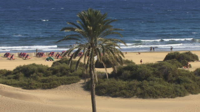 ws, td, playa del ingles, gran canaria, canary islands, spain - fan palm tree stock videos and b-roll footage