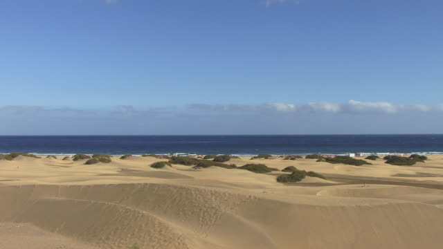 ws, pan, playa del ingles, gran canaria, canary islands, spain - fan palm tree stock videos & royalty-free footage