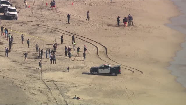 playa del rey, ca, u.s. - aerial view of people watching gray whale spotted near shore of dockweiler beach, that dies hours later, on wednesday,... - whale stock videos & royalty-free footage
