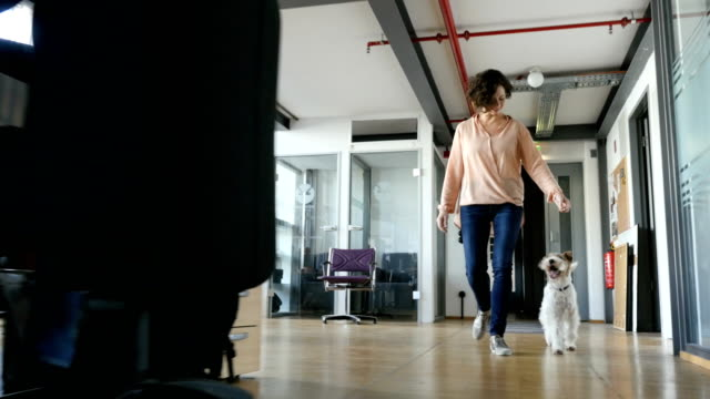 playful businesswoman walking with dog - following stock videos & royalty-free footage