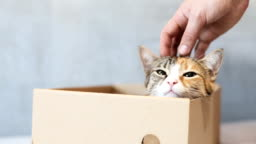 Playful cat in a box of cardboard