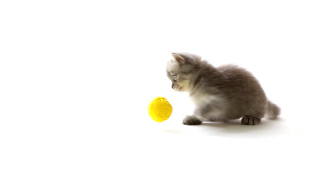 playful cat - white background stock videos & royalty-free footage