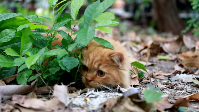 playful cat - hide and seek stock videos & royalty-free footage