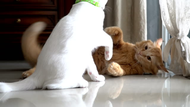 playful cats - two animals stock videos & royalty-free footage