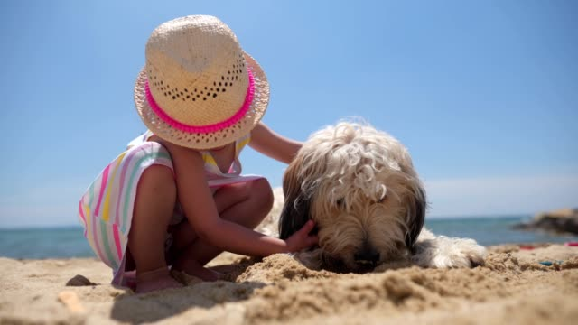vídeos de stock e filmes b-roll de playful child and a dog on the beach - acariciar