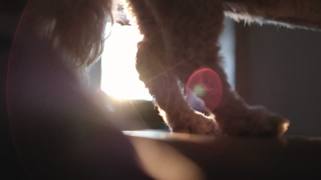 Spielerische niedlichen kleinen Hund