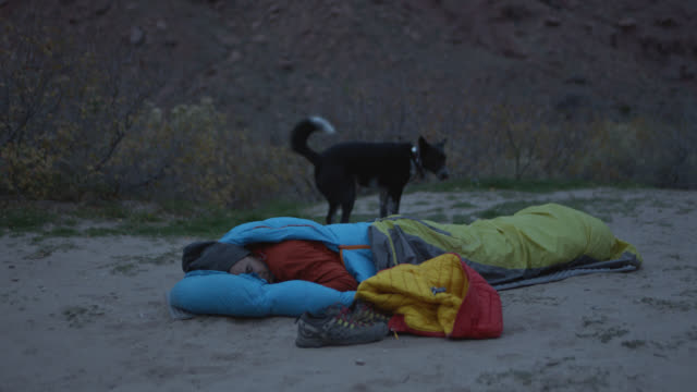 Playful dog attempts to wake young man in sleeping bag on camping trip.