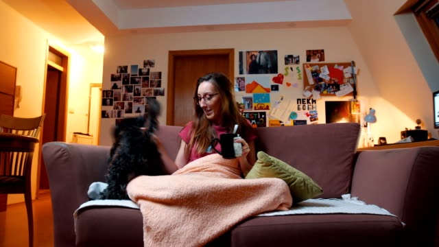 playful dog makes company to his sick owner - blanket stock videos and b-roll footage