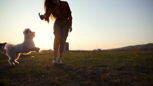 Spielender Hund versucht, einen Stock auf Wiese bei Sonnenuntergang zu fangen