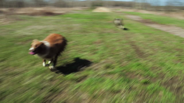playful dogs - careless stock videos & royalty-free footage