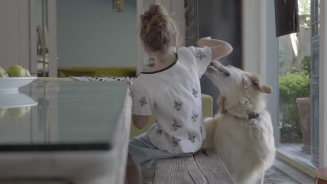 vídeos de stock, filmes e b-roll de playful girl feeding dog while sitting on bench - vida simples