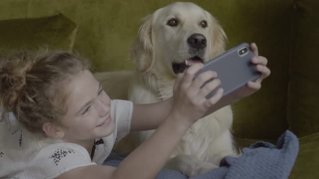 vídeos de stock e filmes b-roll de playful girl taking selfie with golden retriever on sofa - one animal