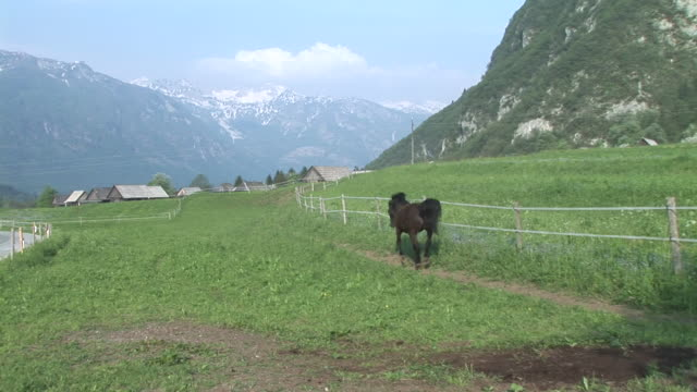 hd: a playful horse - stallion stock videos & royalty-free footage