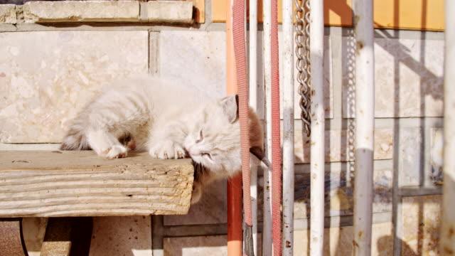 MS verspielte Kätzchen Fallen aus dem Tisch