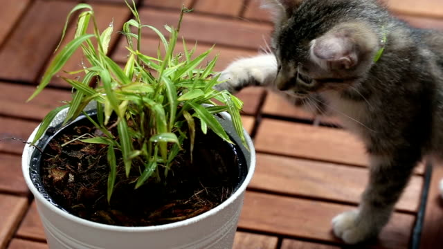 stockvideo's en b-roll-footage met playful kitten - bamboo plant