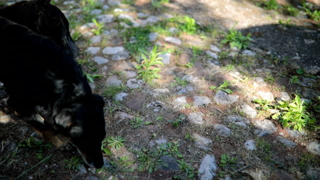 vídeos de stock e filmes b-roll de playful little black dog - fofo texturizado