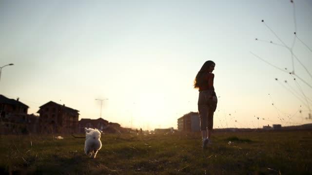 Verspielte maltesische Hund läuft mit Stock im Mund mit jungen Frauen an seiner Seite im öffentlichen Park bei Sonnenuntergang