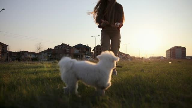 美しい晴れた日にスティックで遊んで遊び心のあるマルタの子犬 - 棒切れ点の映像素材/bロール