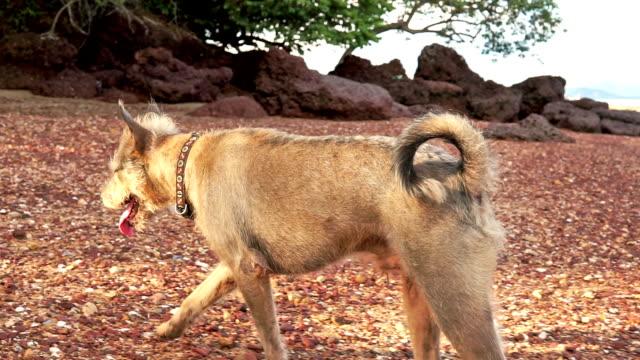 Verspielte Haustiere: Hund am Strand