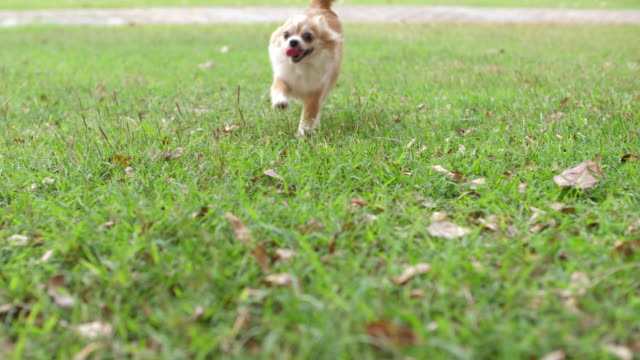 Playful Pets:Dog running