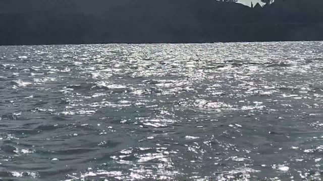 playful pod of bottlenose dolphins put on an energetic display off west cork in ireland on august 15. footage by... - dolphin stock videos & royalty-free footage