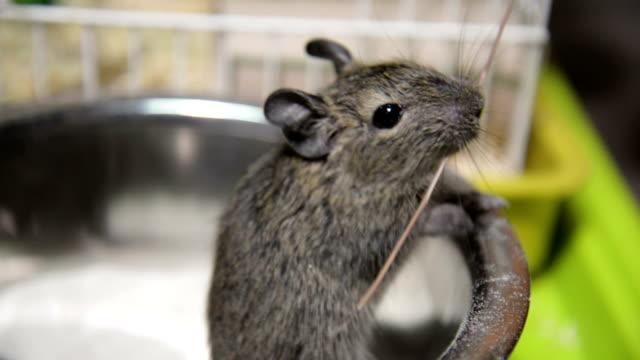 vídeos y material grabado en eventos de stock de juguetón ardilla - animales en cautiverio