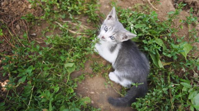 vídeos de stock, filmes e b-roll de gatinhos vadios brincalhão na grama - grupo de animais