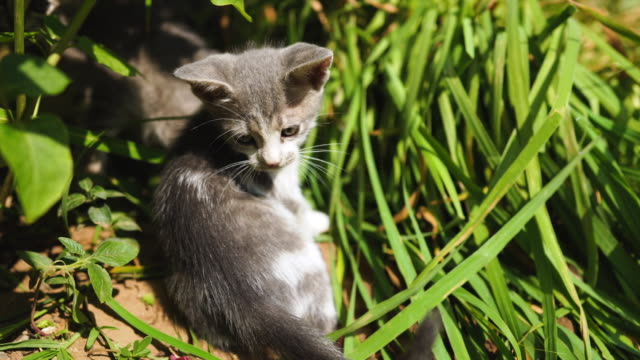 Playful stray Kittens in the grass