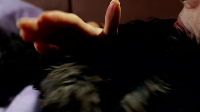 Lekfull kvinna kyssar och kramar sin hund